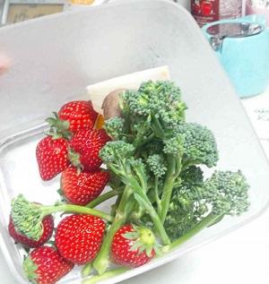 真空保存容器セビアでイチゴと菜の花を保存いただいている様子